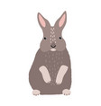 cute bunny or rabbit isolated on white background vector image vector image