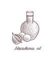 drawing macadamia oil vector image vector image