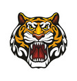 tiger animal muzzle sport team mascot icon vector image vector image