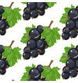black currant seamless pattern background vector image vector image