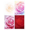 set colorful rose background vector image