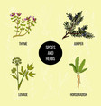 hand drawn set of culinary herbs and spices vector image