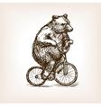 Circus bear on bicycle hand drawn sketch vector image