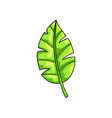 fresh green leaf from tropical collection isolated vector image