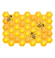 bee on honeycombs isolated on white background vector image vector image