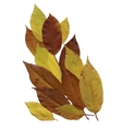 Dry herbarium leaves on white background vector image