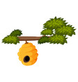 beehive on tree branch vector image