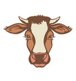 cow head farm animal color graphic vector image