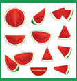 set of fresh watermelon in various slice styles vector image