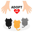 adopt me three kittens looking up to human hand vector image vector image