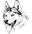 dog husky hand-drawn ink on white background vector image