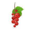 red currant realistic of vector image