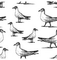 seamless background walking seagulls vector image vector image