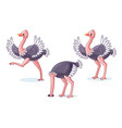set of ostriches in different poses vector image vector image