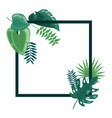 tropical leaves foliage frame decoration vector image vector image