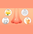 allergic sickness red nose allergy illnesses vector image