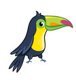 cute toucan on white background vector image vector image