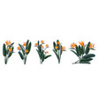 strelitzia reginae tropical flower bouquets set vector image