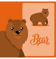 bear cute animal cartoon vector image vector image