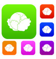 cabbage set collection vector image vector image