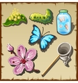 Life of a butterfly in drawn set of entomologist vector image