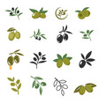 mediterranean olive branches icons with oil vector image vector image