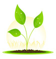 plant seed growth vector image vector image