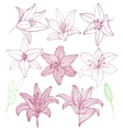 set of hand-drawn lilies vector image vector image