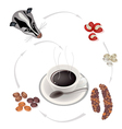 Smoking Hot Coffee with Civet Coffee Beans vector image vector image