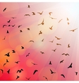 Birds seagulls black silhouette on pink vector image vector image