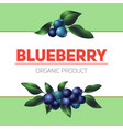 blueberry concept background cartoon style vector image vector image