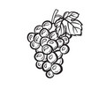 cluster of grapes hand drawn sketch icon vector image vector image