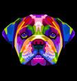colorful english bulldog on pop art style vector image