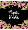 Plants and herbs background vector image