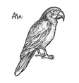 sketch ara parrot hand drawn neotropical bird vector image