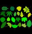 tree leaves green set vector image