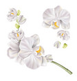 3d white orchid flower realistic design vector image vector image