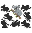 Cartoon koala vector image