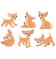 chihuahua dog cartoon set vector image vector image