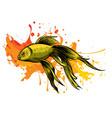 a carassius goldenfish in aquarium vector image vector image