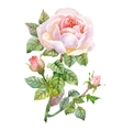 Watercolor garden blooming red roses vector image vector image