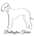 bedlington terrier dog coloring vector image vector image