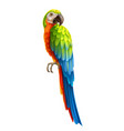 realistic colorful parrot bird 3d macaw vector image
