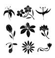 Set of black flower design elements vector image