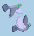 two pigeons flying vector image vector image
