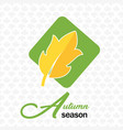 autumn season autumn leave maple background vector image vector image