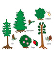 Conifers And Shrubs vector image