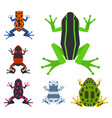 frog cartoon tropical animal cartoon amphibian vector image vector image