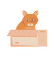 homeless cat vector image vector image