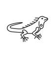 iguana linear icon vector image